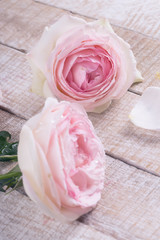 Postcard with pastel roses