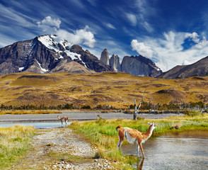 Wall Mural - Torres del Paine, Patagonia, Chile