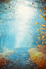 Wall Mural - Foggy day in autumn