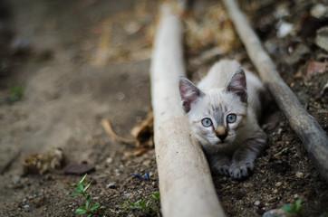 Olhar do gatinho
