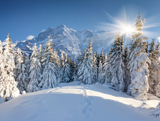 Wall Mural - Beautiful winter landscape in the huge mountains