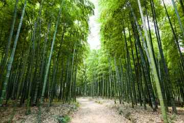 Printed roller blinds Bamboo Bamboo forest