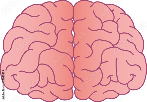Brain front. Stock image and