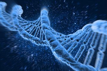 DNA molecules human