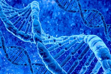 human DNA