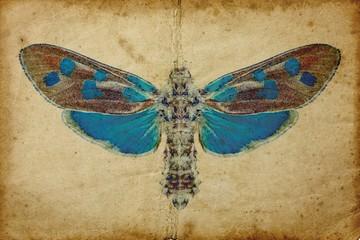 Staande foto Vlinders in Grunge Grunge background