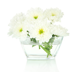 Beautiful flowers in bowl isolated on white