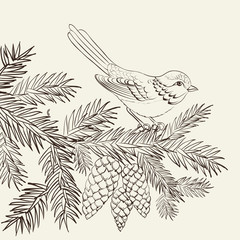 Bird on christmas fir and pinecone.