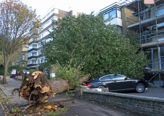 Fallen Elm Tree