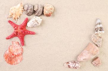 Sea shells and stars on sand.