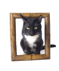 cat on frame on a white background in studio
