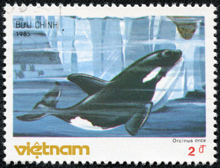 stamp printed in Vietnam shows Killer whale - Orcinus orca