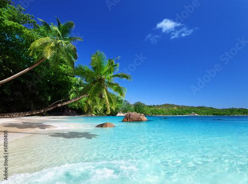берег пальма море солнце пляж  № 3779764 бесплатно