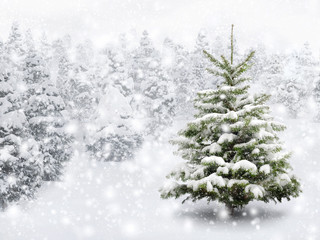 Wall Mural - Tannenbaum in schönem Schneefall
