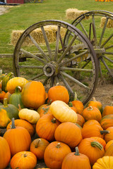 Farm Scene Old Wagon Vegetable Pile Autumn Pumpkins October