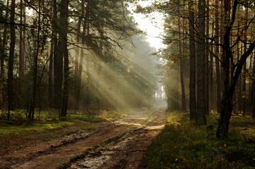 Rano w lesie.
