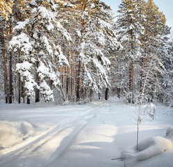 Ski trail in the winter cold forest