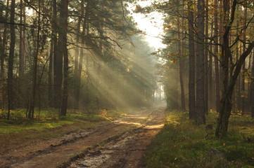Poranek w lesie.