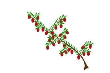 Ilustracja żurawiny
