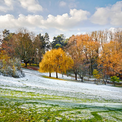 Fototapete - Park in Autumn. The first snow.