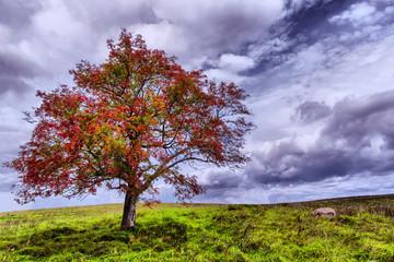 Beauteful nature