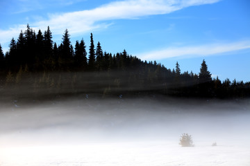 Poster Morning with fog fogy winter forest landscape