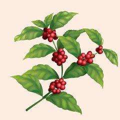 icon coffee tree branch with berries