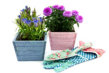 two decorative flowering plants