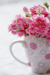 Gentle pink flower in pink cup. Shallow depth of field.