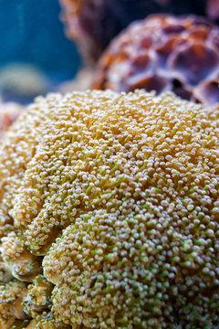 The Clownfish resort a anemone