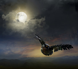Photo Blinds Full moon owl in the night sky.