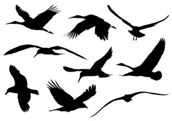 Bird Silhouettes #2