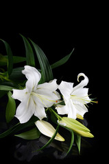 Stores photo Fleur de lis White lily on a black background
