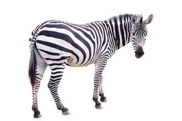 Photo sur cadre textile Zebra Zèbre zebra