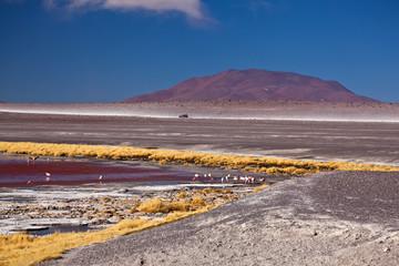 Bolivia - laguna Colorada