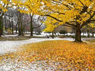 Wall Mural - Park in Autumn. The first snow.