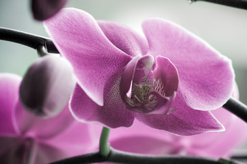close up of Beautiful purple orchid