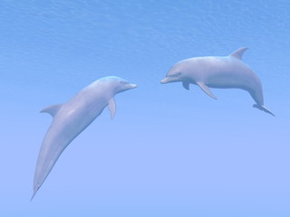 Dolphins date - 3D render