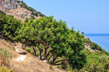 Typical nature landscape on Cyprus