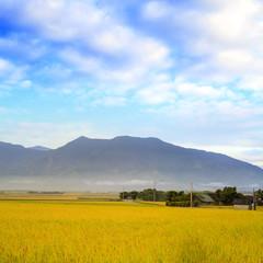 Beautiful paddy place