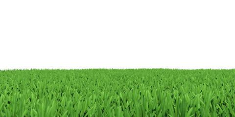 Field of green grass