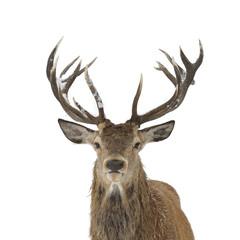 Door stickers Deer Red deer portrait