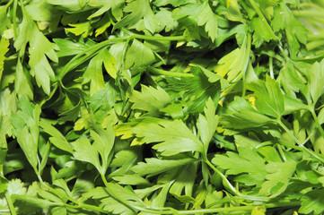 fond de feuilles de persil