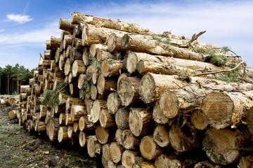 Fototapeta Lumber in the Forest - Wood obraz
