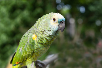 Сolorful parrot closeup