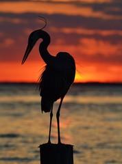 Heron Silhouette at Sunset