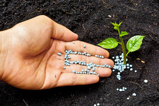 a hand giving fertilizer to a young plant