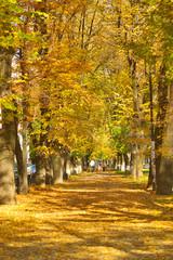 Autumn city alley