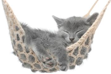Cute gray kitten lying in hammock