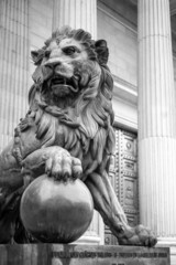 Lion Madrid